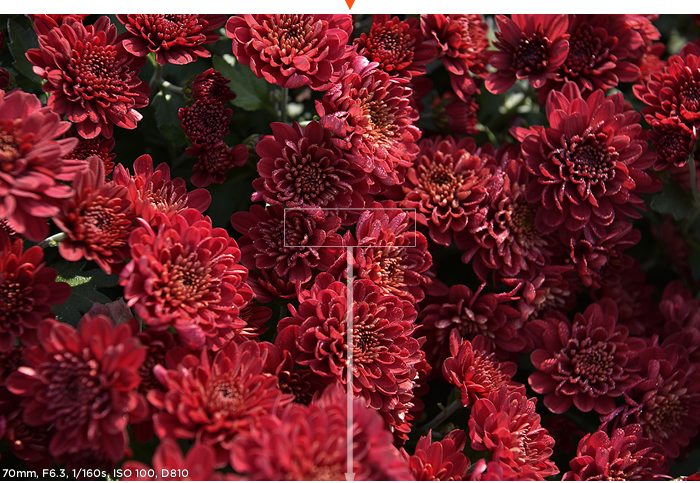 70mm, F6.3, 1/160s, ISO 100, D810 샘플사진 이미지